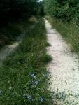Camino_ Lorraine_juillet_2014.MG